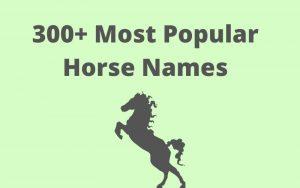 male horse names