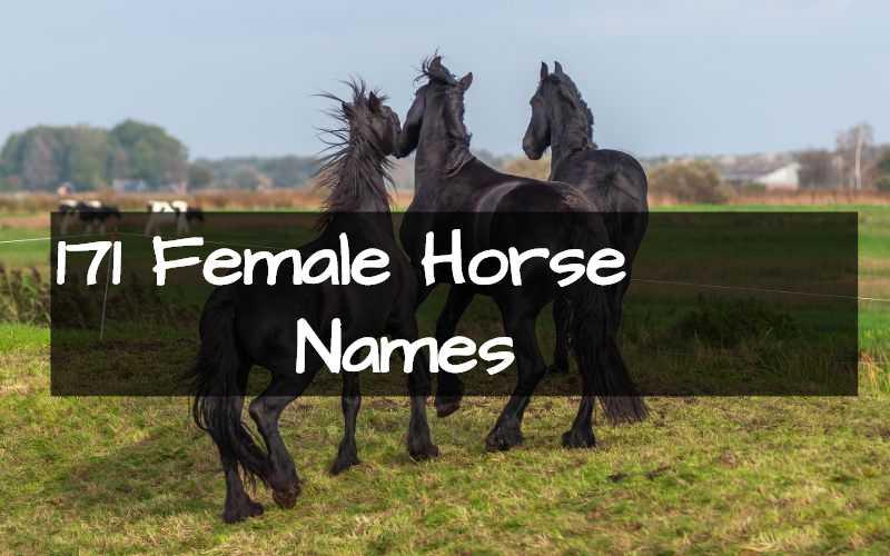 10++ Common female horse names ideas