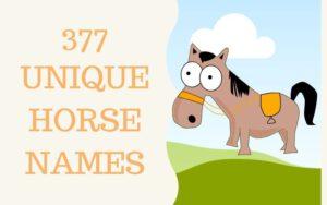 unique horse names