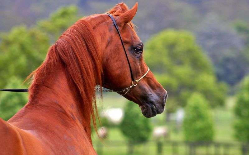 13 Most Popular Horse Breeds in the World
