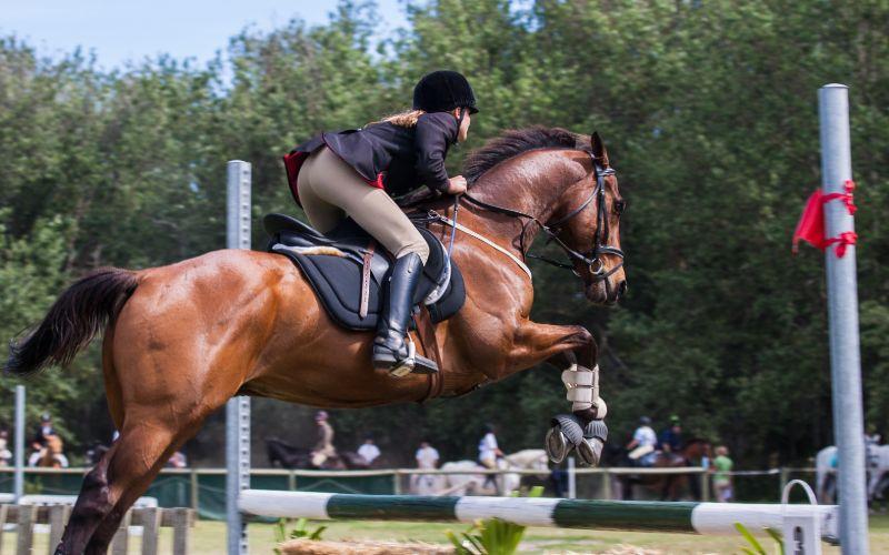 best arabian horse names