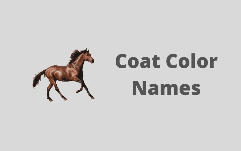 coat color names