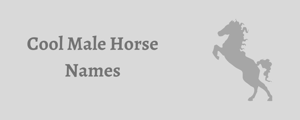 cool male horse names