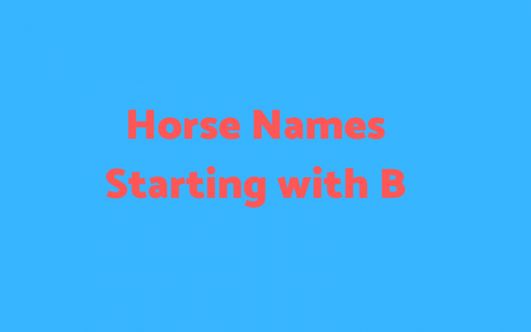 horse names starting with b