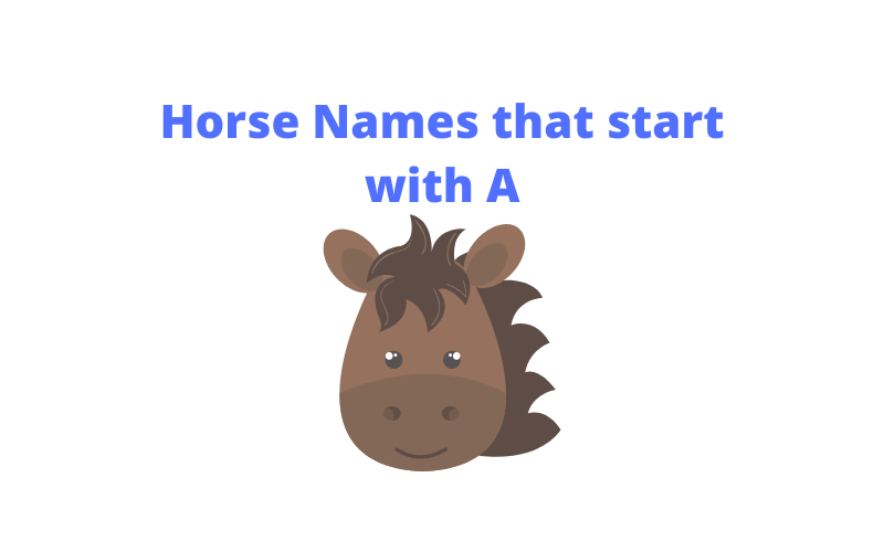 horse names beginning with ah