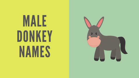 male donkey names