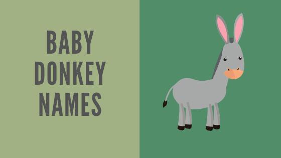 baby donkey names