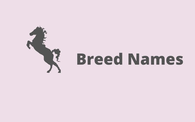 breed names