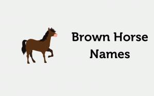 brown horse names