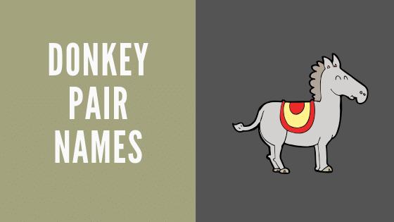 donkey pair names