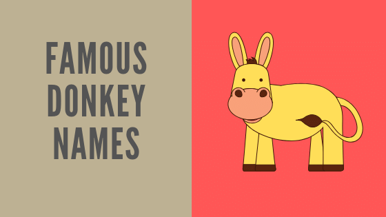 famous donkey names