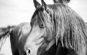 friesian horse names
