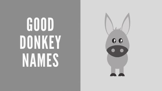 good donkey names