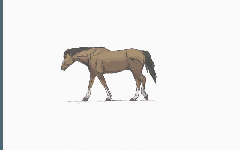 gray horse names