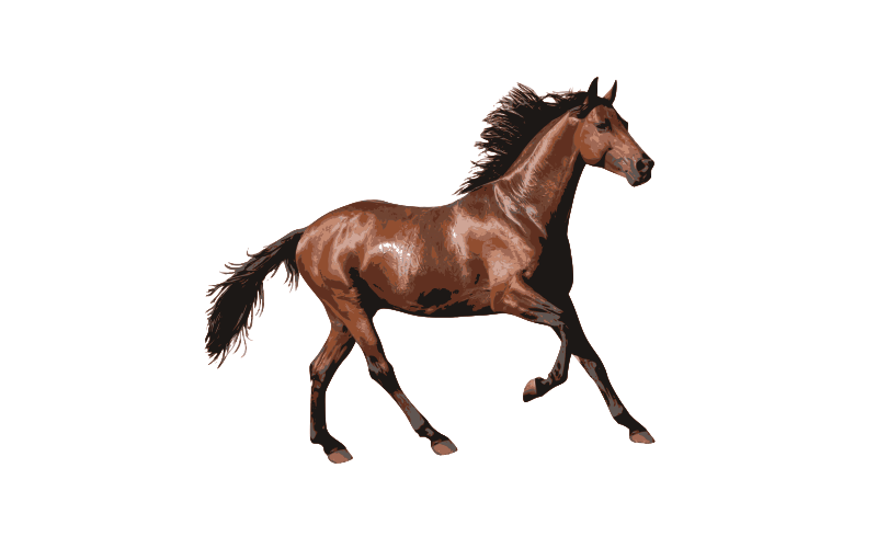 horse names beginning with e