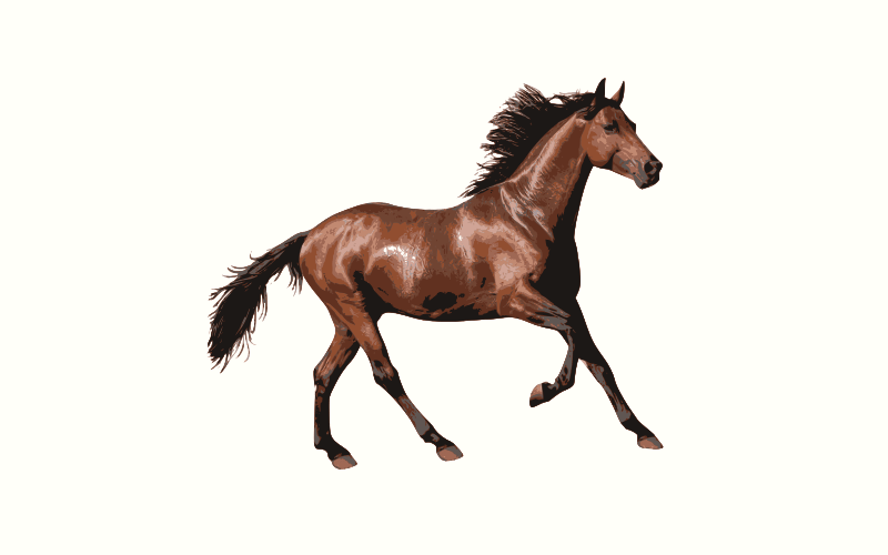 light brown horse names