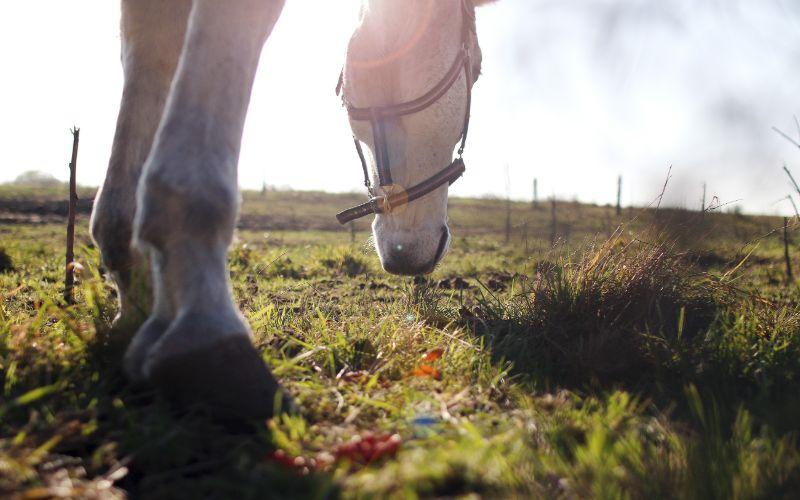 Morgan horse names