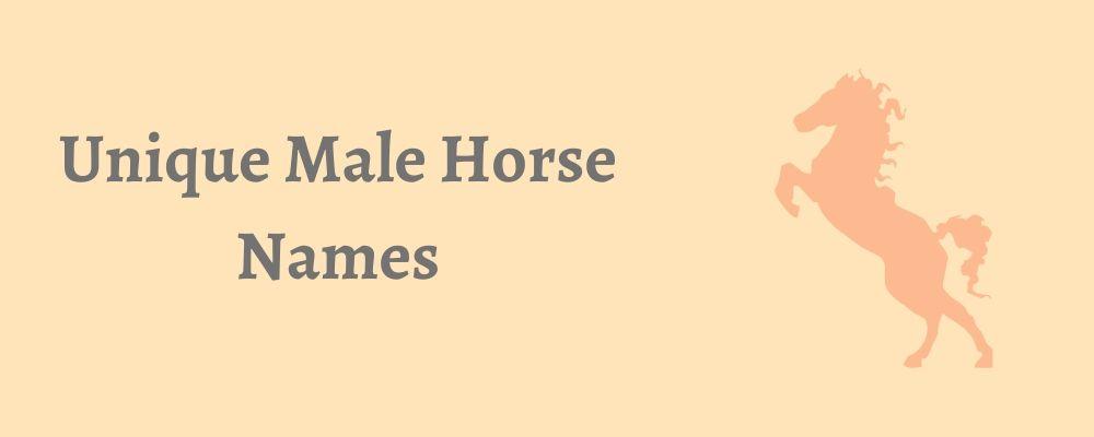 unique male horse names