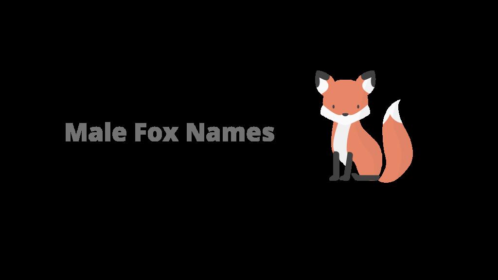 male fox names
