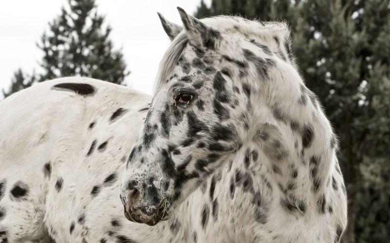 appaloosa horse names