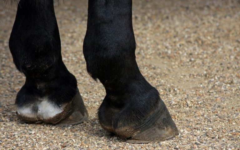 best horses hoof supplement