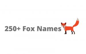 fox names