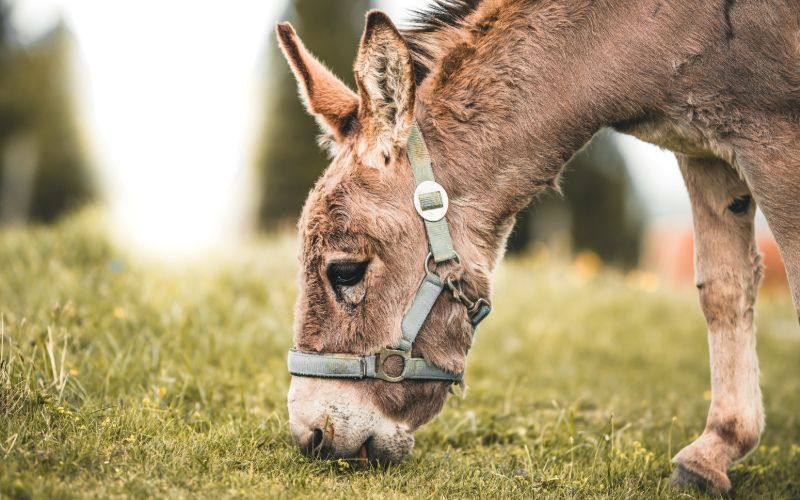 male donkey names that start with d