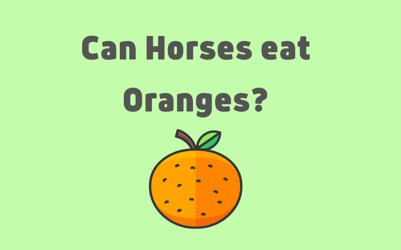 can horses eat oranges