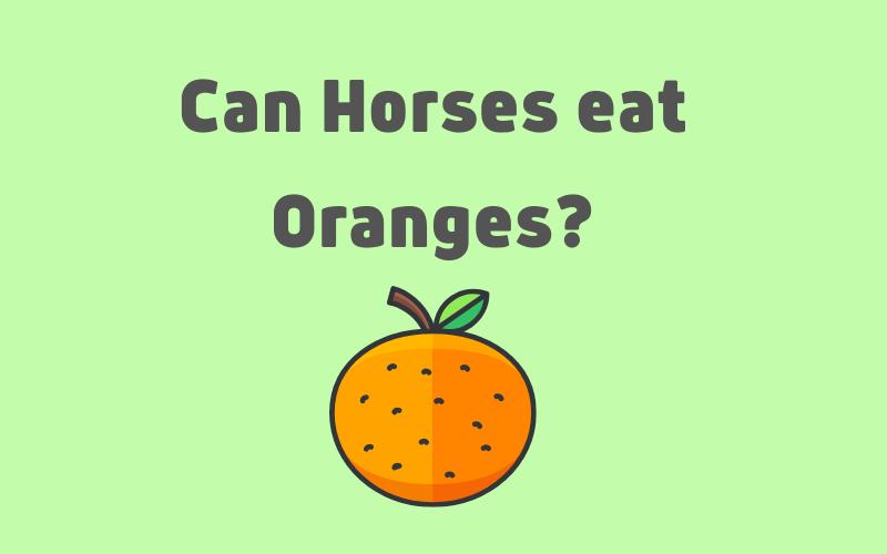can horses eat oranges