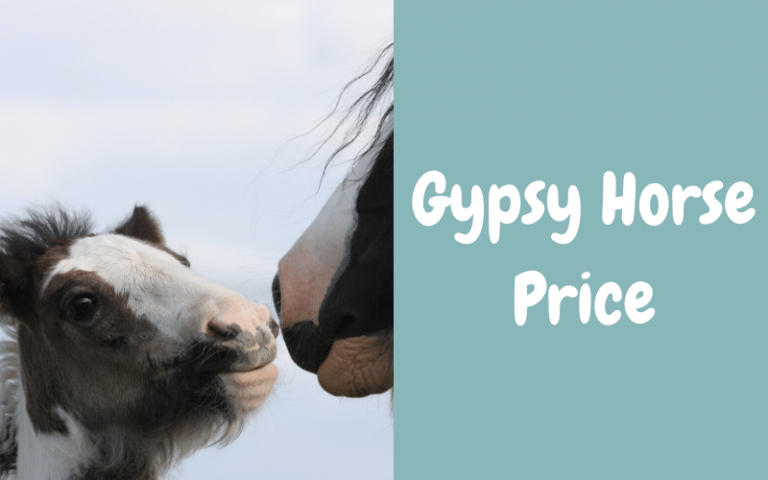gypsy horse price