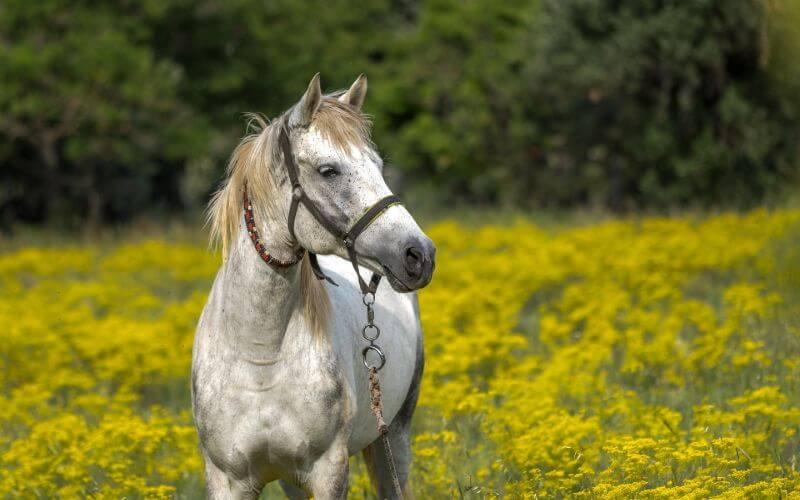 badass horse names