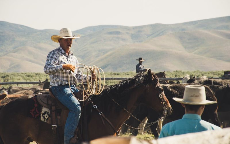 best horse riding jeans