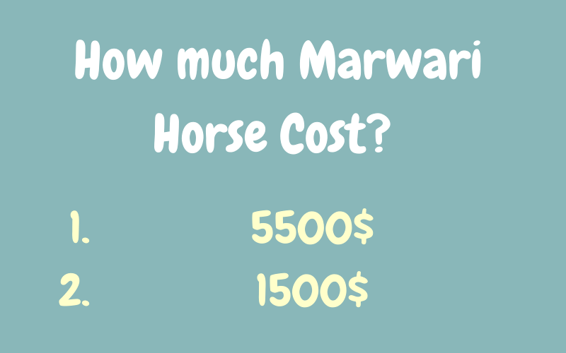 marwari horse cost