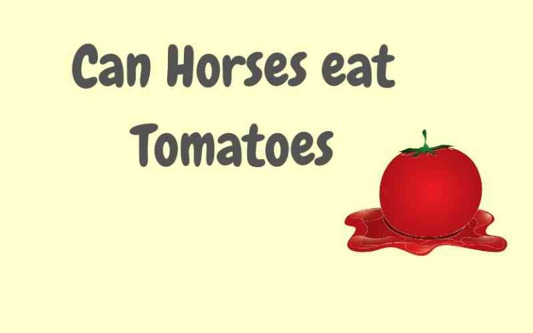 can horses eat tomatoes