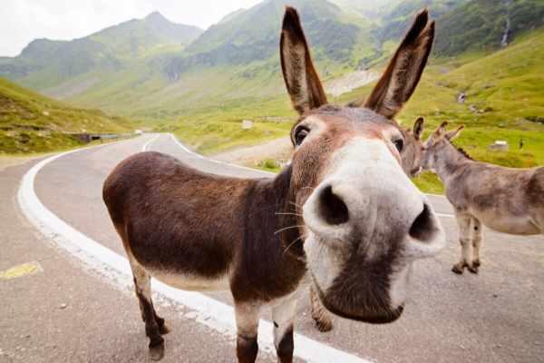70+ Female Donkey Names