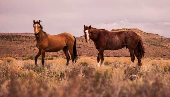 female mustang horse names