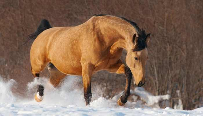 male mustang horse names