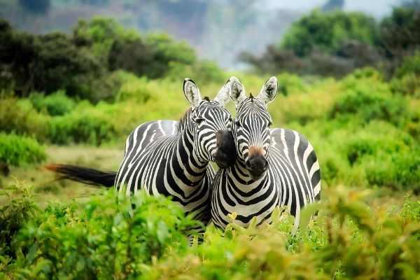 Zebra Names: 200+ Most Popular Ideas