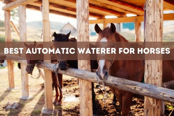 Best Automatic Waterer for Horses