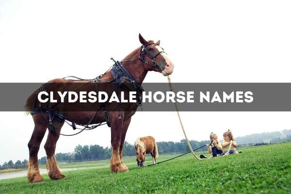 Clydesdale Horse Names