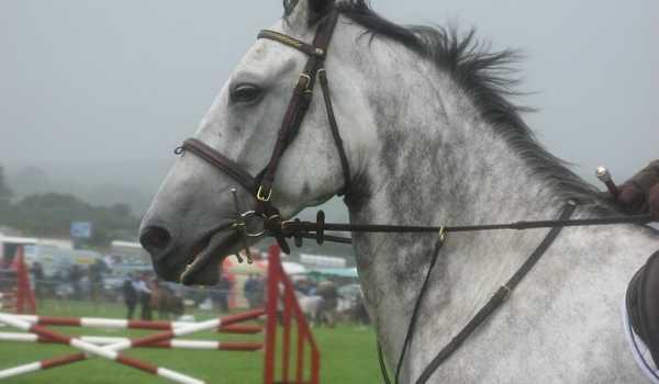 arabian-dapple-gray