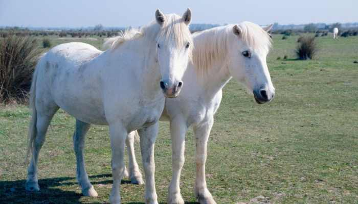 female white horse names