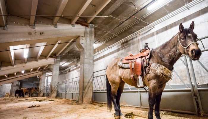 horse stall fan