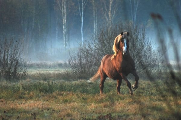 latin horse names