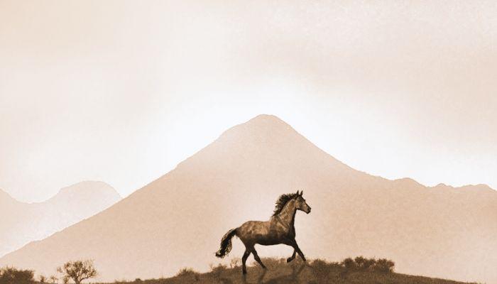male latin horse names