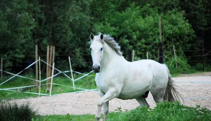 male white horse names