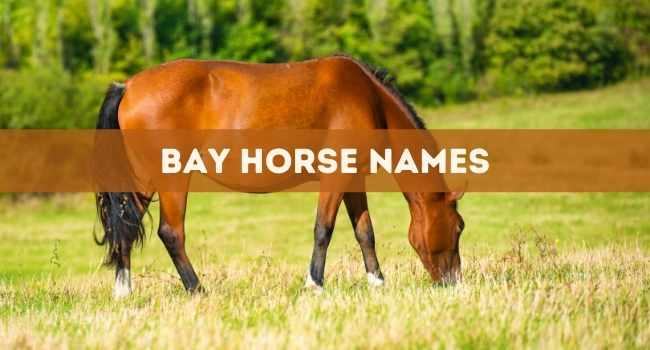 bay horse names