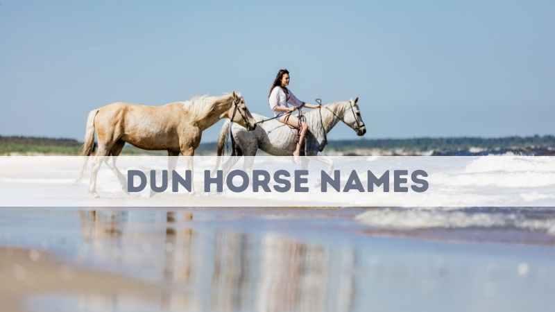 Dun Horse Names