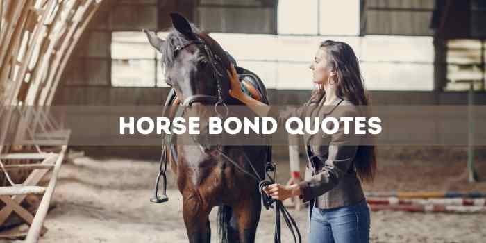 horse bond quotes