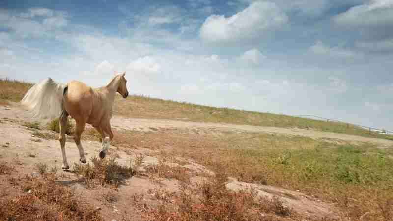 Sorrel-Horse-Names-for-Mares